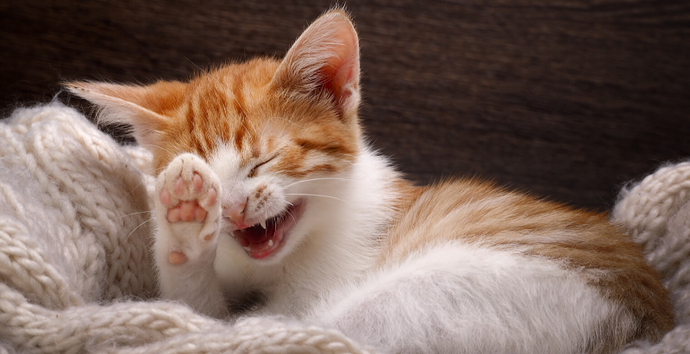 15 Purr-Fect Cat Puns For Cat Lovers