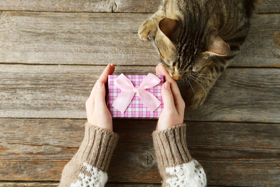 10 Best Gifts for Cat Owners