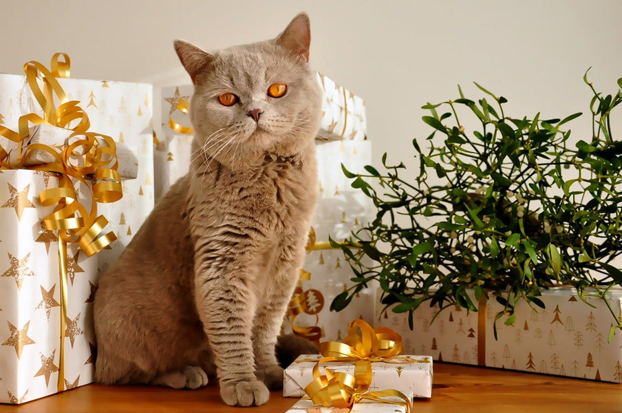 10 Best Birthday Gifts for Cat Lovers