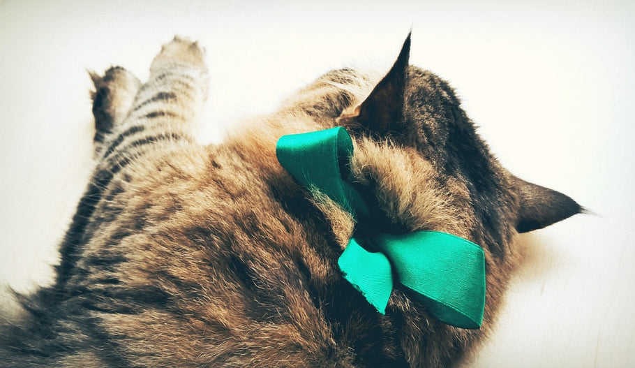 10 Best Christmas Gifts for Cat Lovers