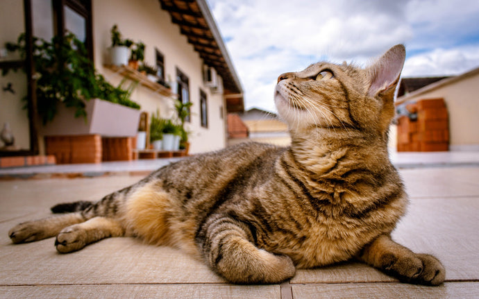 Should You Let Your Cat Outside: 5 Things To Consider