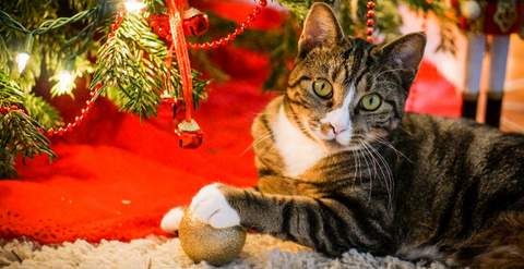 10 Cats That Almost Destroyed Christmas