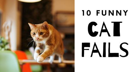 10 Cat Fails To Make You Laugh