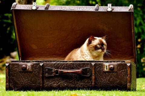 travelling with a cat