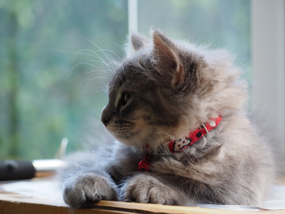 Cat Blog, Purrs and Whiskers, Blog for Cat Lovers