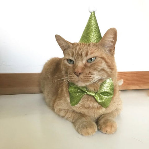 Cat Birthday Outfit