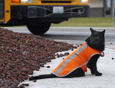 Cat Whose Job Is To Be A Crossing Guard