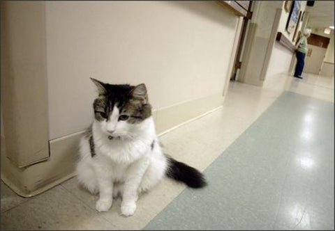 Cat Who Works At A Nursing Home