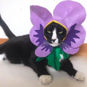 Pet Cat Halloween Costumes, Funny Violet Flower Cat Costume