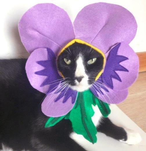 Cat Costumes for Cats, Handmade Violet Flower Cat Costume Perfect for Halloween