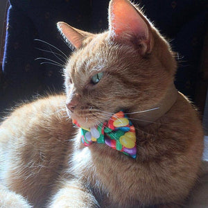 Unique Things for Cats, Handmade Cat Bow Tie with Jelly Beans