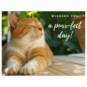 Gifts for Cat Lovers, $75 Cat Lover Gift Card