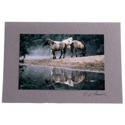 Photo 3 - photo gift card by Susan Jarman
