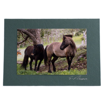 Photo 15 - photo gift card by Susan Jarman