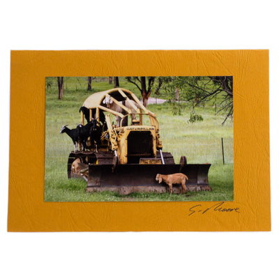 Photo 17 - photo gift card by Susan Jarman