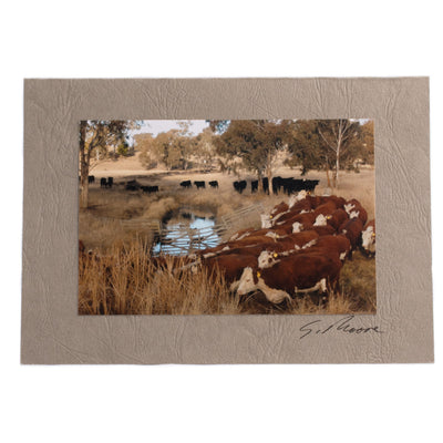 Photo 21 - photo gift card by Susan Jarman