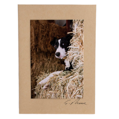 Photo 22 - photo gift card by Susan Jarman