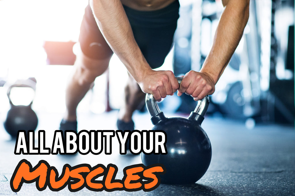 Harder, better, faster, stronger... How do your muscles work?