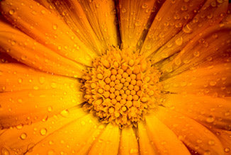 Benefits of Calendula on Radiation-induced Dermatitis