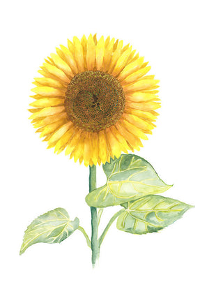 Emma's Sunflower
