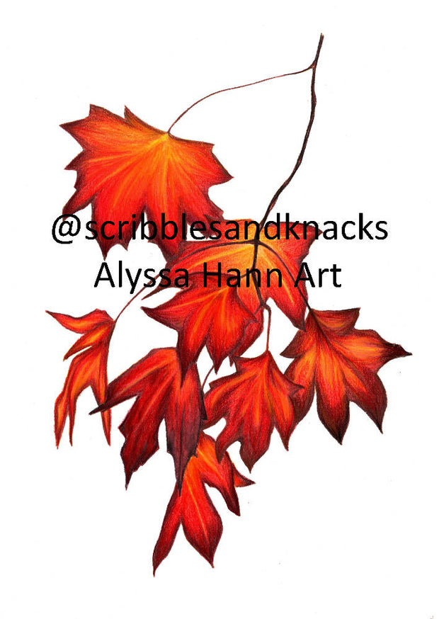 Autumn Maple Leaves A3 Print