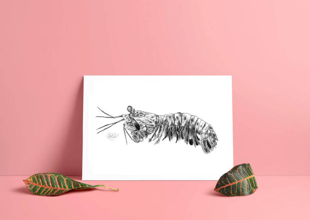 Mantis Shrimp Art Print - Nautical Drawing - A4