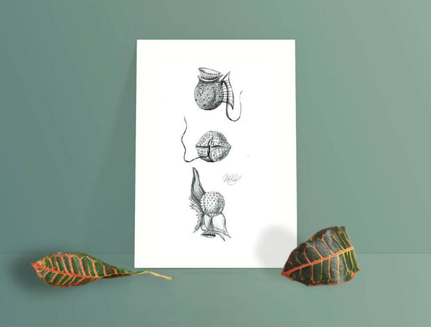 Phyto Plankton Art Print - Nautical Drawing - A4