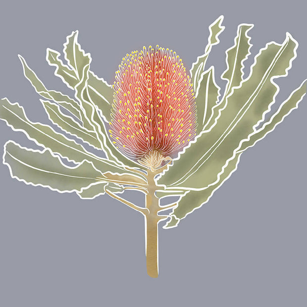 Banksia Illustration Print (Limited Edition)