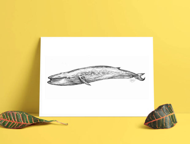 Blue Whale Art Print - Nautical Drawing - A4
