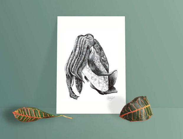 Giant Cuttlefish Art Print - Australian Squid- Nautical Drawing - A4
