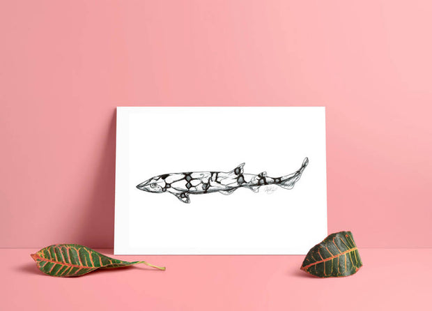 Shark Art Print - Chain Cat Shark - A4