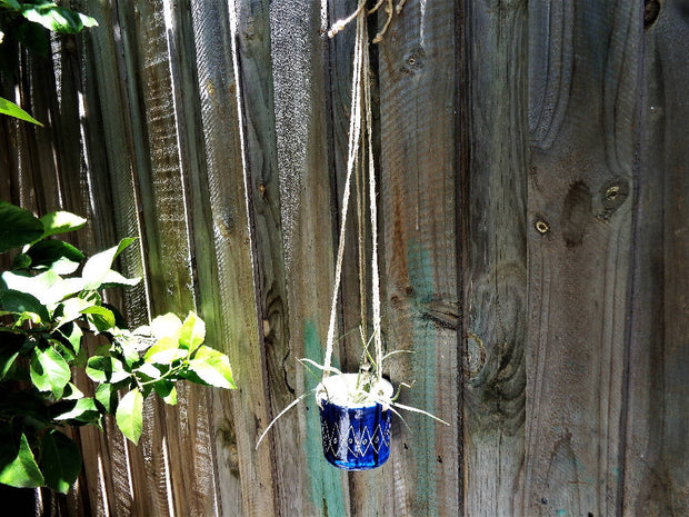 Small sgrafitto hanging planter, cobalt dark blue carved diamond indoor outdoor coastal succulent pot