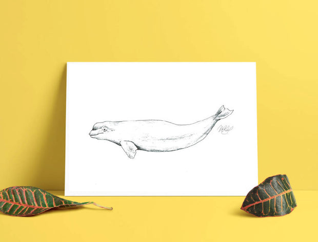 Beluga Whale Art Print - Nautical Drawing - A4