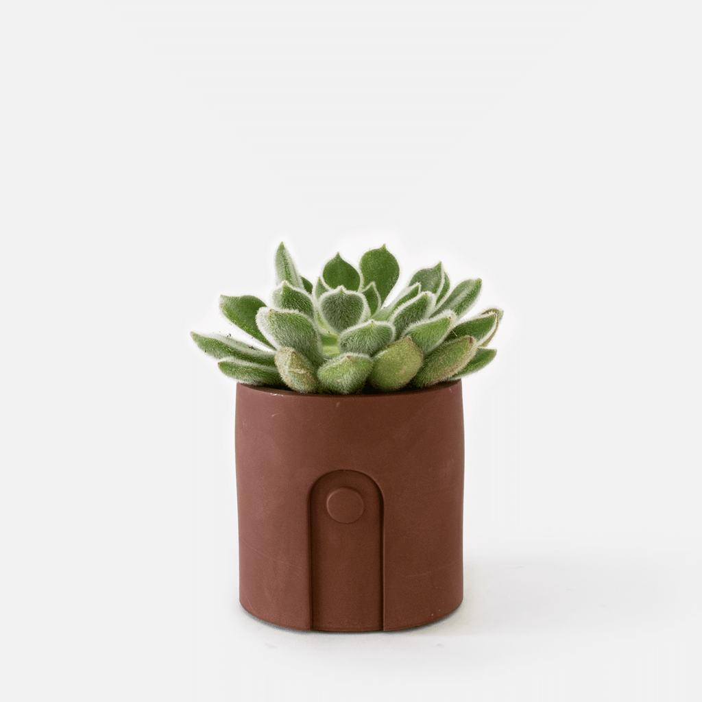 Emila Planter - Maroon Brown