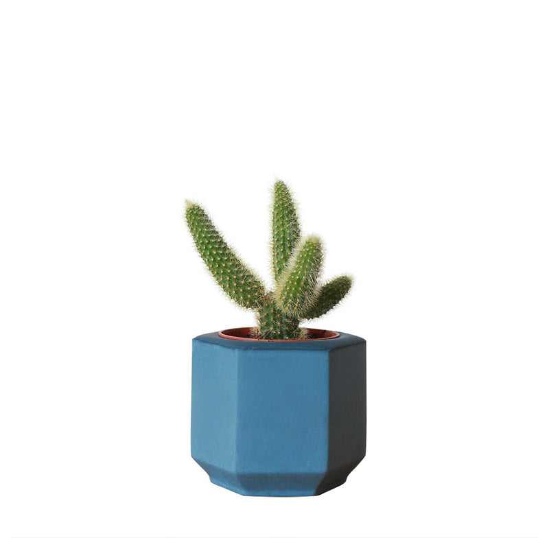 Small Blue Hexagonal Planter