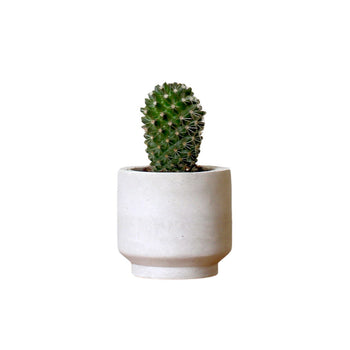 Small Round Concrete Planter