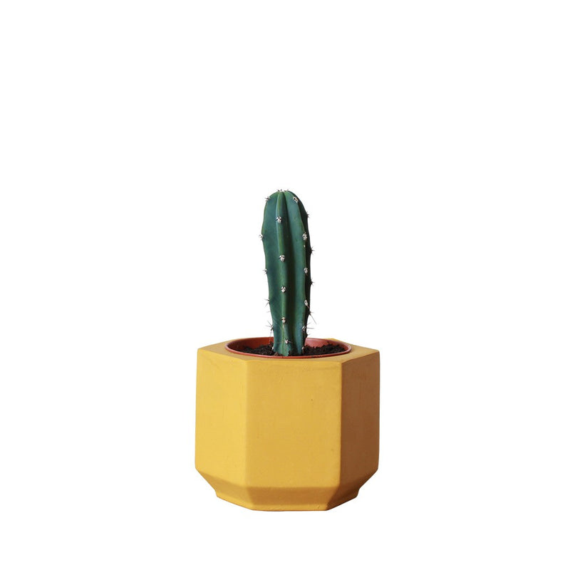 Small Yellow Hexagonal Planter