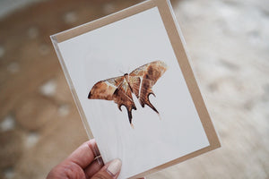 The-Lovely-Other-Illustration-Artwork-Giftcard-Moth-Butterfly