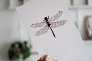 The-Lovely-Other-Illustration-Artwork-Print-Azure-Dragonfly-3