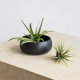 Airplants Mini 3 Pack