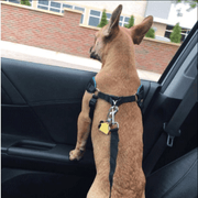 EASY-PROTECT™ DOG SEAT BELT