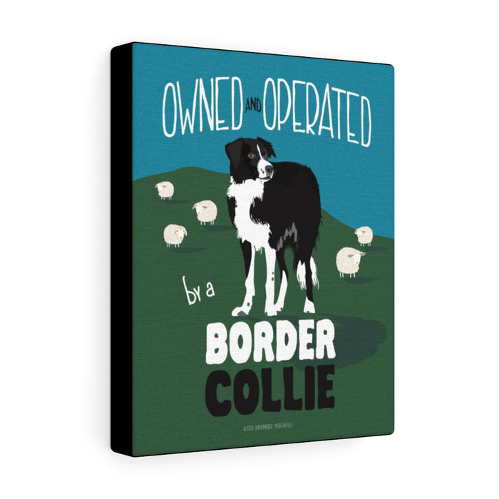 Border Collie - Canvas Gallery Wrap