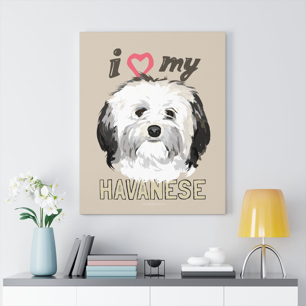 Havanese Canvas Gallery Wrap