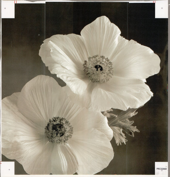 Floral BLK I - 20 X 20 Inches (Canvas Roll or Stretched ready to hang)