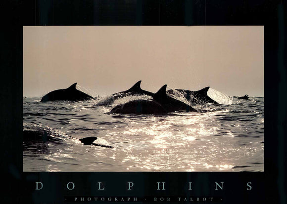 Dolphins, 1986 by Bob Talbot - 18 X 24 Inches (Art Print)
