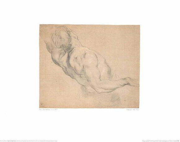 Study of a Male Torso by Peter Paul Rubens - 16 X 20