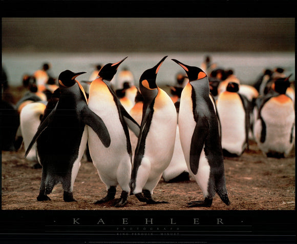 King Penguin-Minuet by Wolfgang Kaehler - 24 X 32