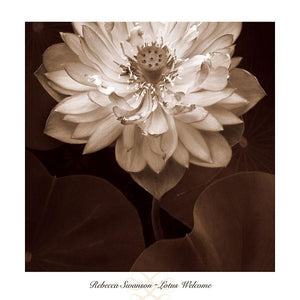 "Lotus Welcome by Rebecca Swanson - 24 X 24"" - Fine Art Posters."