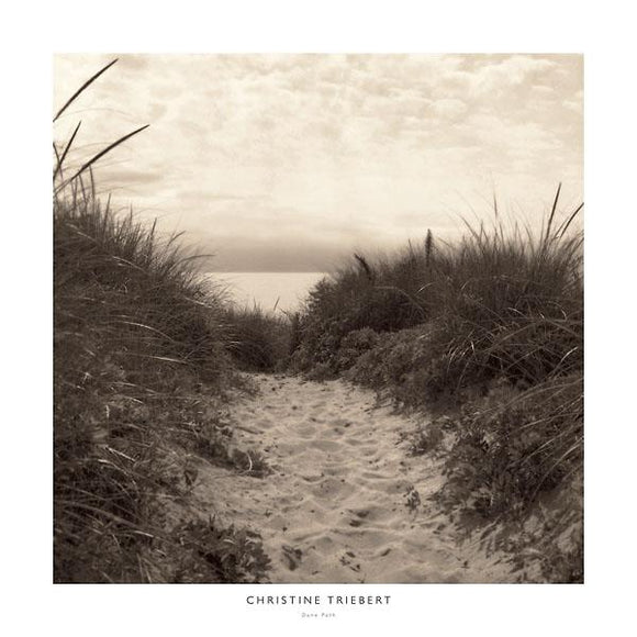 Dune Path by Christine Triebert - 24 X 24