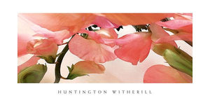 "Sweet Peas #1 by Huntington Witherill - 18 X 36"" - Fine Art Posters."